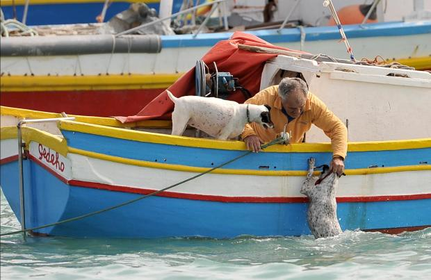 A man fetches his dog from the sea after the dog swam from shore towards the boat in Marsaxlokk on March 7. Photo: Chris Sant Fournier