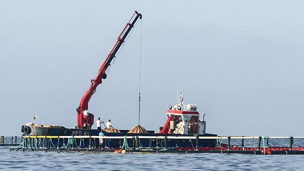 Fish farms. File photo