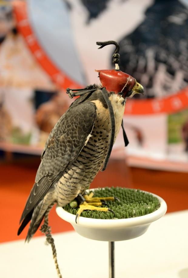 A falcon stands on a perch with a hood covering its eyes at the Game & Country Expo at the MFCC in Ta'Qali on August 25. Photo: Matthew Mirabelli