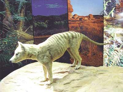 German Tourist Vows To Film A Tasmanian Tiger