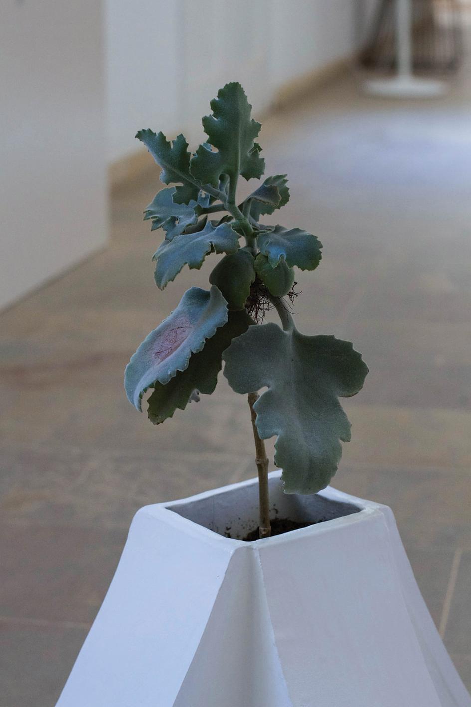 Round Plant Pots Do Not Fit by Keit Bonnici