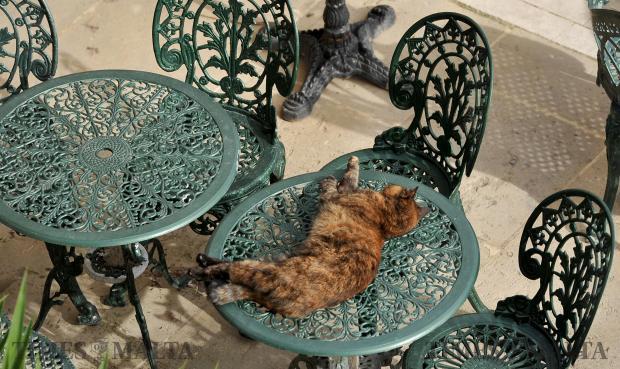 A cat basks in the November sun in Valletta on November 30. Photo: Chris Sant Fournier