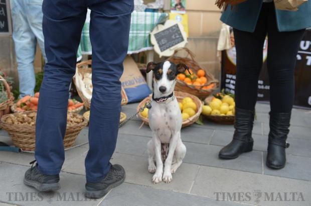 A dog waits patiently outside a vegetable stall at the Climate Change awareness-raising event in Attard on February 14. The event organised by the Maltese NGO Kopin and the Attard Local Council was aimed at raising awareness on climate change and related issues. Photo: Matthew Mirabelli