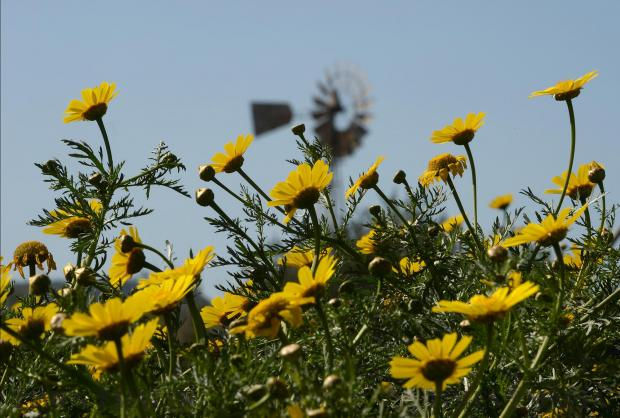 Flowers bloom on the last day of winter in Mosta valley on March 20. Photo: Matthew Mirabelli
