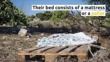 Evicted, abandoned and desperate to return to Qormi cow farm