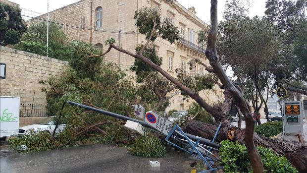 Trees, lamp posts and street signs all toppled over in Sliema. Photo: Luca Catania