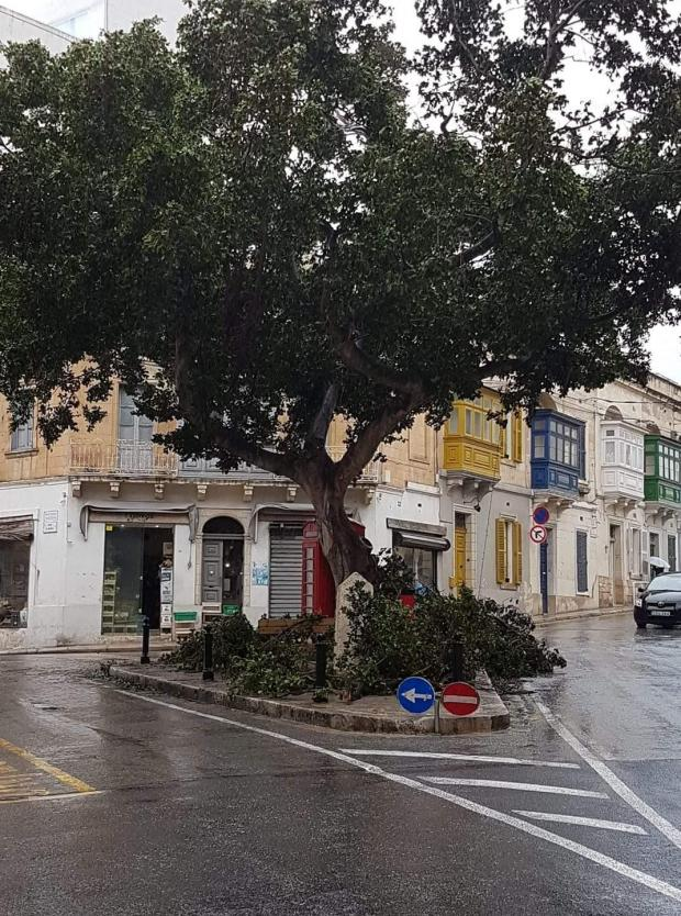 Three trees Dingli Street, Sliema. Photo: Rowena Pullicino - Facebook