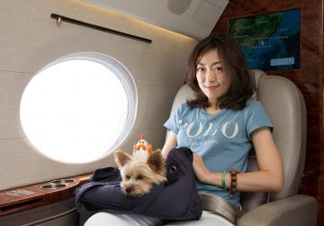 Pampered pooches take to the sky in travel niche