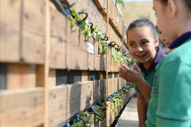 A young girl admires a new vertical wall garden which works by hydroponics at Luqa Primary school on June 19. Photo: Matthew Mirabelli