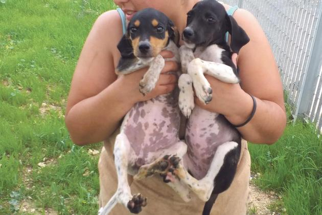 Sanctuaries brace for abandoned gift-puppies