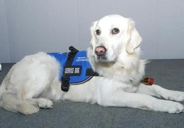 Quincy formally graduated as a fully-fledged Service Dog.