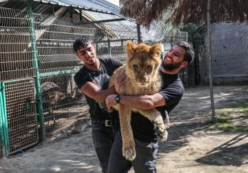 Zoo in Palestine offers chance to play with a lion