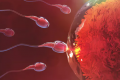 How the tail of the human sperm could change IVF