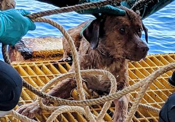 Dog pulled from seas 220km off Thai coast to be adopted by rescuer