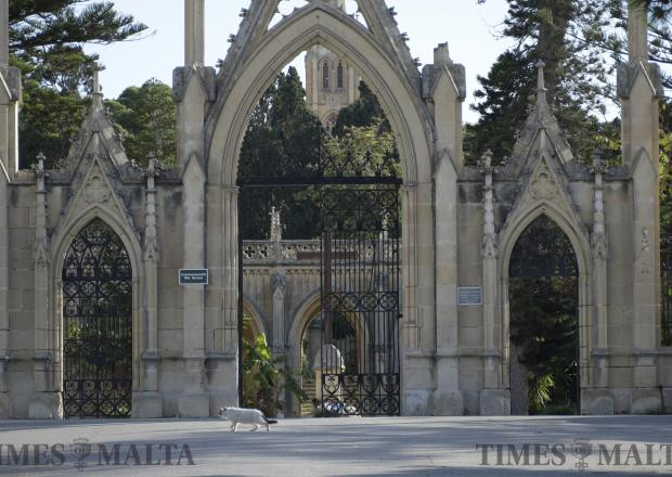 A cat walk's past the outer gates of the Adolorata Cemetery on November 7. Photo: Mark Zammit Cordina