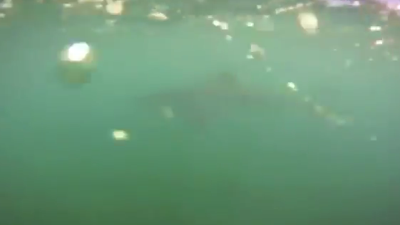 The shark seen in the footage