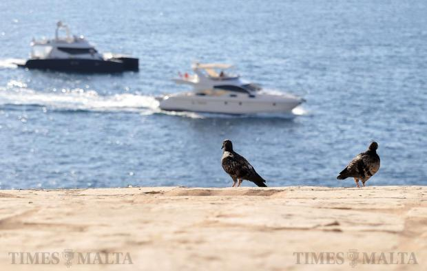 Two pigeons perch themselves on the Valletta bastions as two boats leave the Marsamxett Harbour on July 29. Photo: Chris Sant Fournier