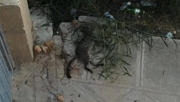 A photo of the dead kitten uploaded to Facebook on Monday.