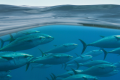 Under-fire aquaculture operators launch environmental protection campaign