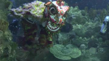 Underwater lion dance in Malaysia before Lunar New Year