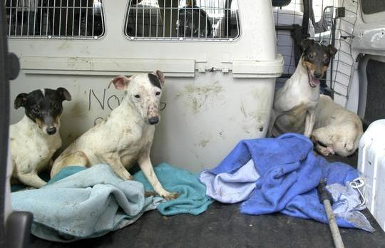 Some of the dogs in a van after they were rescued from their cages last April.