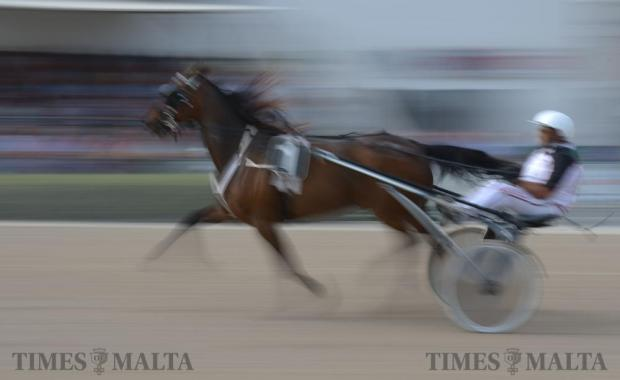 A horse and its driver warm up for a race at the Marsa horse racing track on June 5. Photo: Matthew Mirabelli