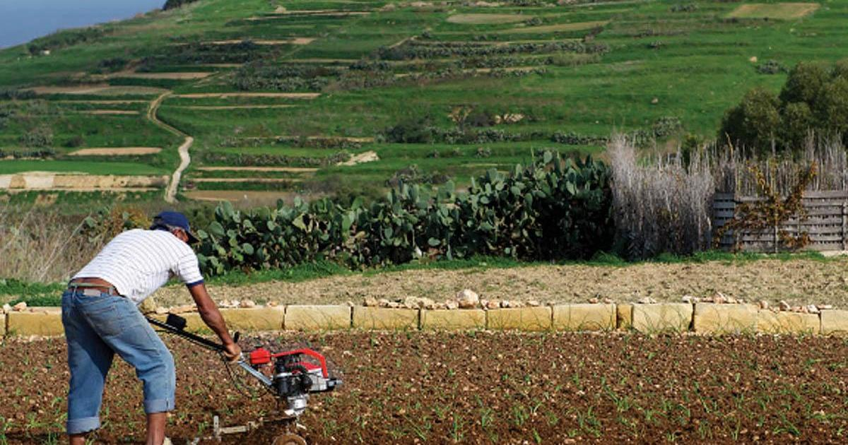 Supporting local farmers through water efficiency - Times of Malta