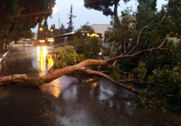 "A tree blocking Notary Zarb Street, Attard. Picture - Omar Camilleri - <a href=""mailto:mynews@timesofmalta.com"" target=""_blank"">mynews@timesofmalta.com</a>"