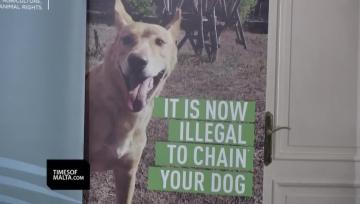 Watch: It is finally illegal to chain dogs