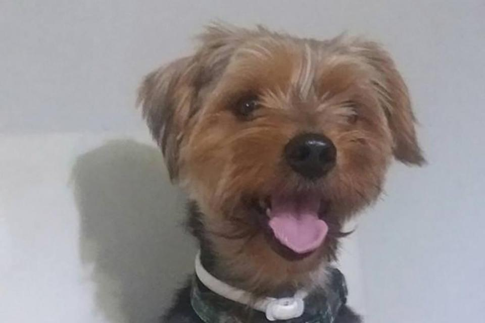 Call for licence for dog groomers after family terrier dies
