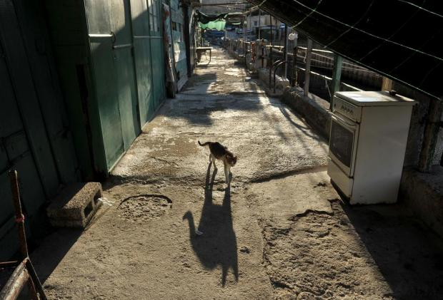 A cat walks past at the 'Fossa' in Valletta on November 15. Photo: Chris Sant Fournier