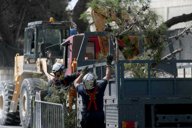 A dangerous Lija tree is removed on April 11. Photo: Jonathan Borg