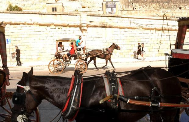 Horse drawn cabs, better known as 'karozzini', are seen at the Grand Harbour in Valletta on September 2. Photo: Chris Sant Fournier