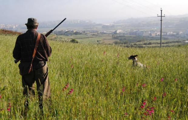 Hunter Mark Mifsud Bonnici patrols a field as his dog Cookie tries to flush out any quail that may be resting in the tall grass in Bidnija on April 15. Photo: Mark Zammit Cordina
