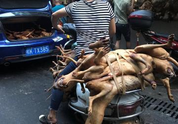China's dog meat festival defiant amid outcry