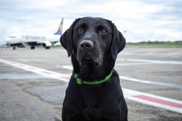 New Customs sniffer dog makes its first interception