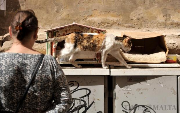 A cat is admired by a passer-by in Valletta on April 20. Photo: Chris Sant Fournier