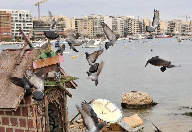 Pigeons flutter around one of the bird shelters at the Duck Village on Manoel Island on February 28. Photo: Chris Sant Fournier