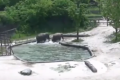 Watch: Elephants rush to rescue drowning calf
