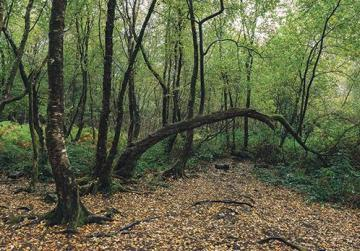 Broceliande – a legendary forest in Brittany, France.