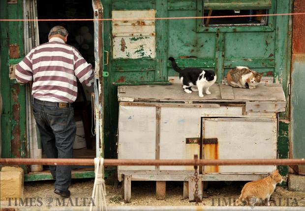 Cats wait while a man enters his shack at il-Foss in Valletta on February 22. Photo: Chris Sant Fournier