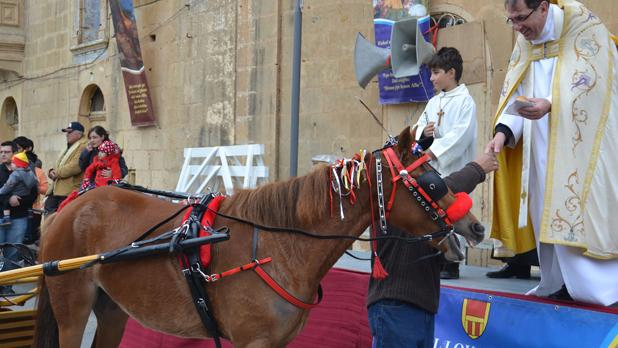 Blessing of horses at the feast of St Anthony the Abbot in Xagħra. Photo: Lawrence Camilleri