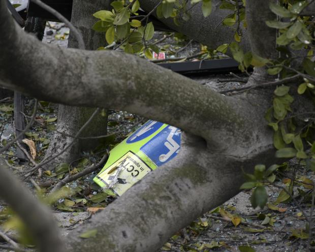 The remains of a bus sign hidden in a tree after a Malta transport bus hit a tree in Pieta on March 15. Photo: Mark Zammit Cordina