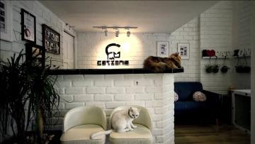 Luxury cat hotel opens in Malaysia