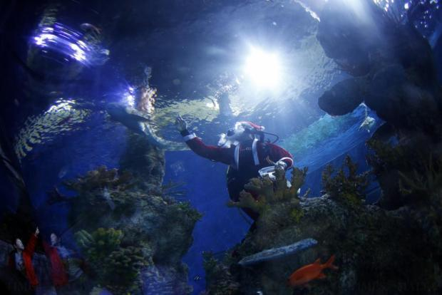 A diver dressed as Santa Claus feeds fish inside a fish tank as a young visitor (left) points at a shark at the Malta National Aquarium in Qawra on December 19. Photo: Darrin Zammit Lupi