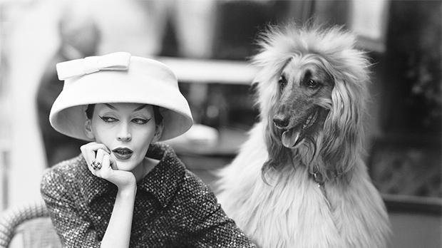 Dovima with Sacha, cloche and suit by Balenciaga, Café des Deux Magots, Paris, 1955. Photo: Richard Avedon © The Richard Avedon Foundation