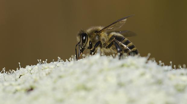 Some experts estimate there are now 60 per cent fewer bee colonies in Malta than there were just 20 years ago. Photo: Malcolm Galea/Shutterstock