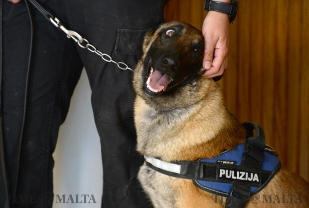 A Belgian shepherd is stroked by his handler during a ceremony where five dogs, all siblings, were welcomed into the Police force in the rank of Sergeant during a ceremony in Ta Kandja on May 9. Photo: Matthew Mirabelli