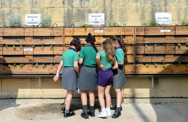 A group of students admire a new vertical wall garden which works by hydroponics at Luqa Primary school on June 19. Photo: Matthew Mirabelli