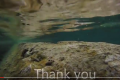 Watch: Diver who raised Qawra alarm says thanks for remedial action